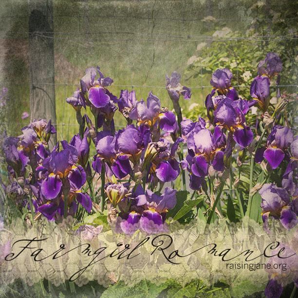 farm_romance-3356
