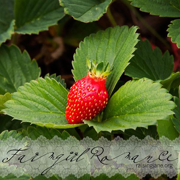 farm_romance-4894