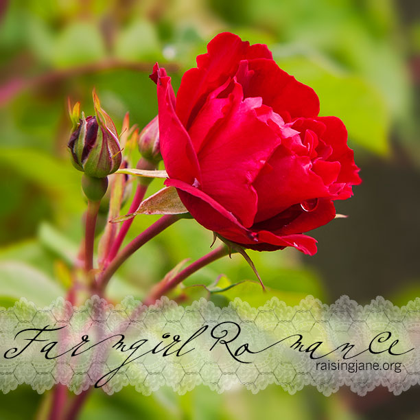 farm_romance-4907