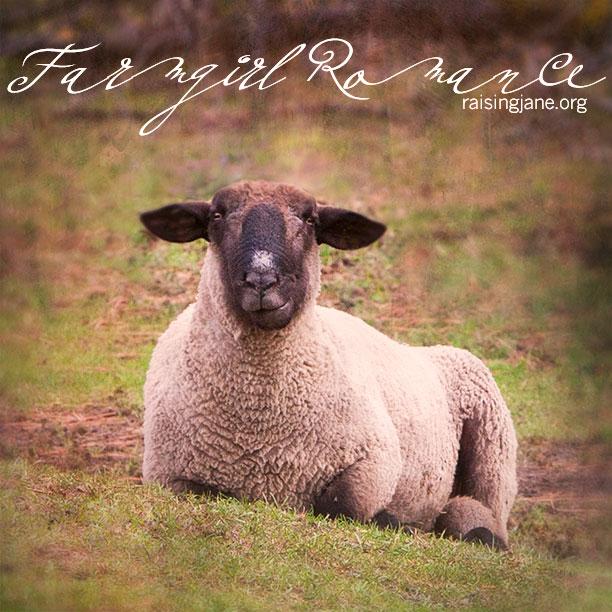 farm_romance-0440