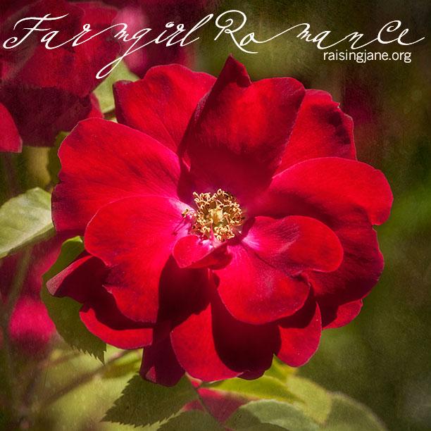 farm_romance-5723