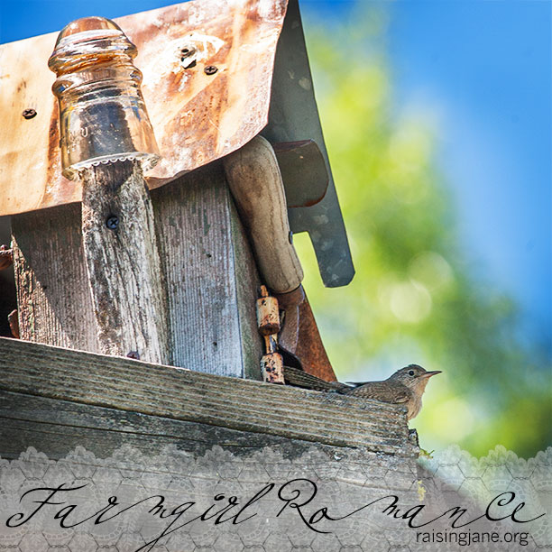 farm_romance-5728