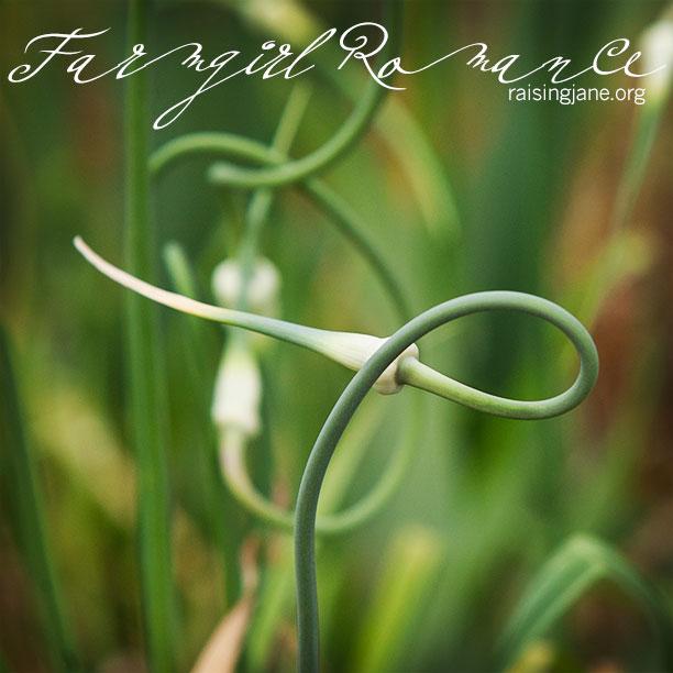 farm_romance-6217