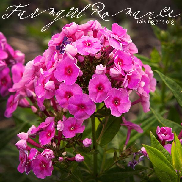 farm_romance-7389