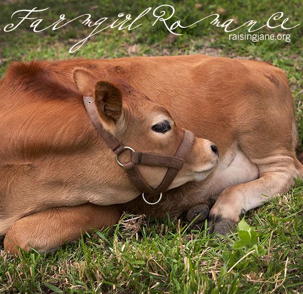 farm_romance_6267