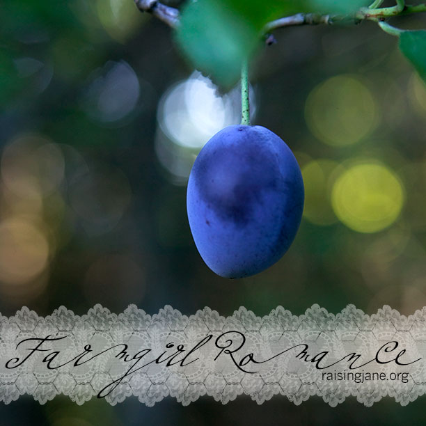 photo-of-the-day_plum