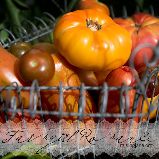 photo-of-the-day_tomato