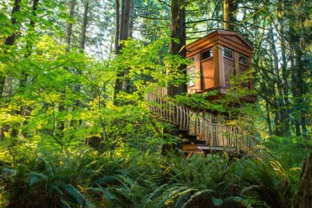 Treehouse Masters Irish Cottage treehouse masters | raising jane journal