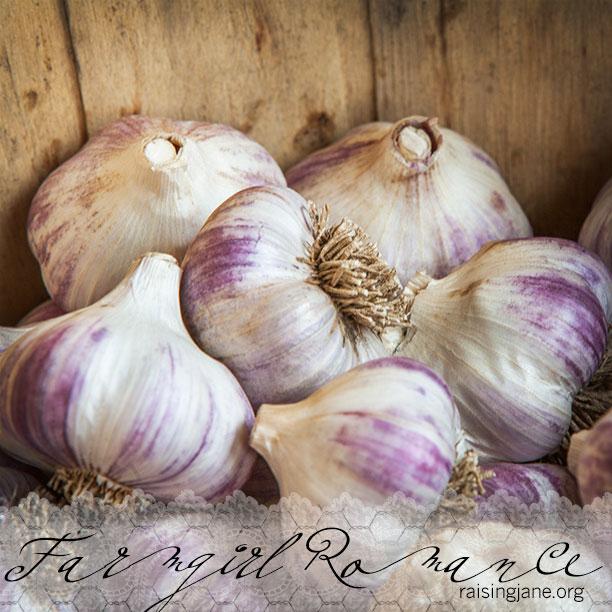 farm-romance_0371