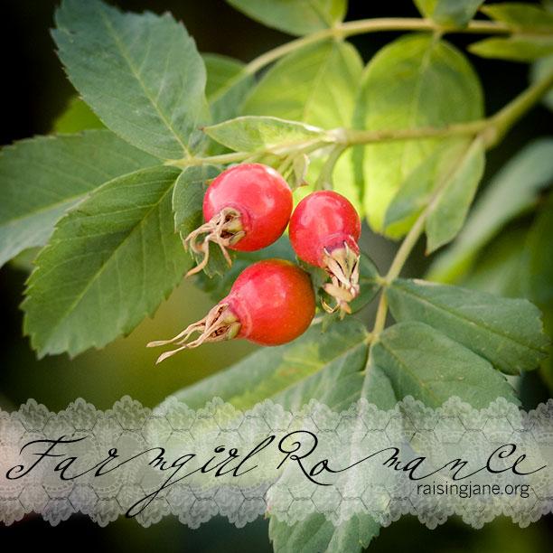 farm_romance-0010