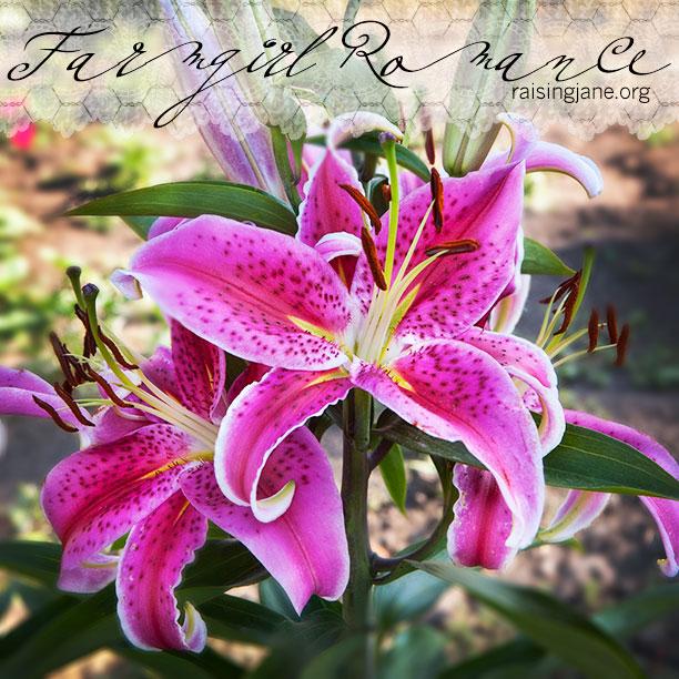 farm_romance-8716