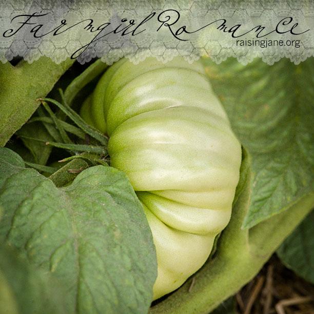 farm_romance-9358