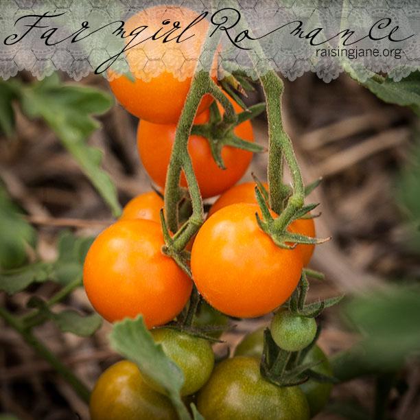 farm_romance-9364