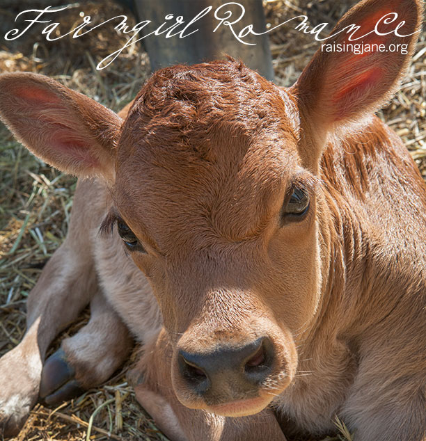 farm_romance-9644