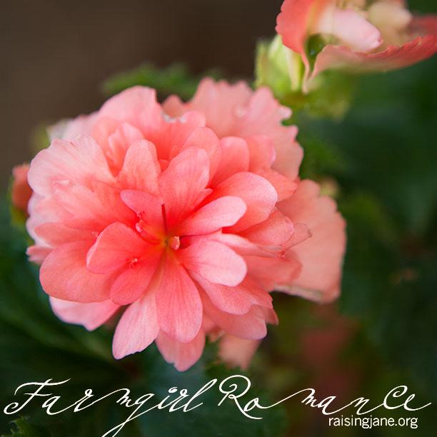 farm_romance_2103