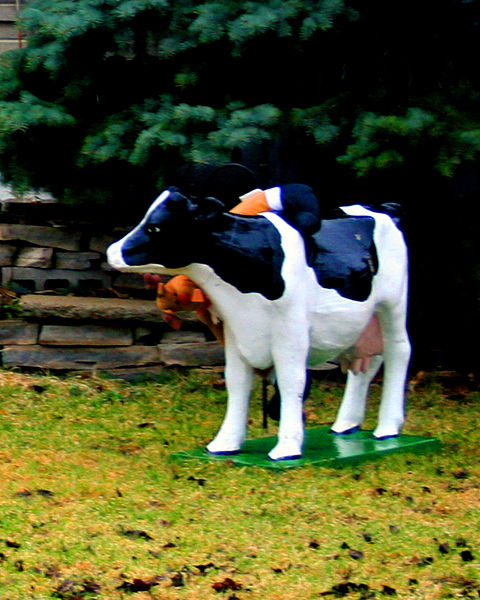 480px-Cow3on_front_lawn