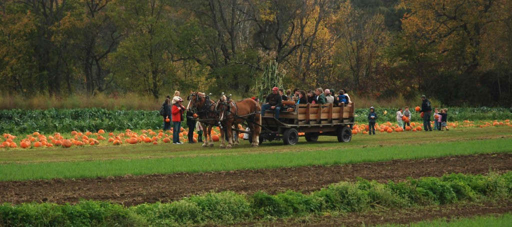 Cedar-Circle-Farm-Horse-drawn-rides-to-pumkin-patch-by-Karen-Neuman4-1024x454