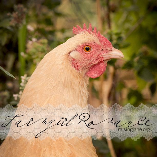 Farm_Romance-3413