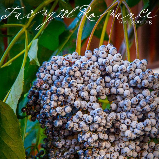 farm_romance-7088