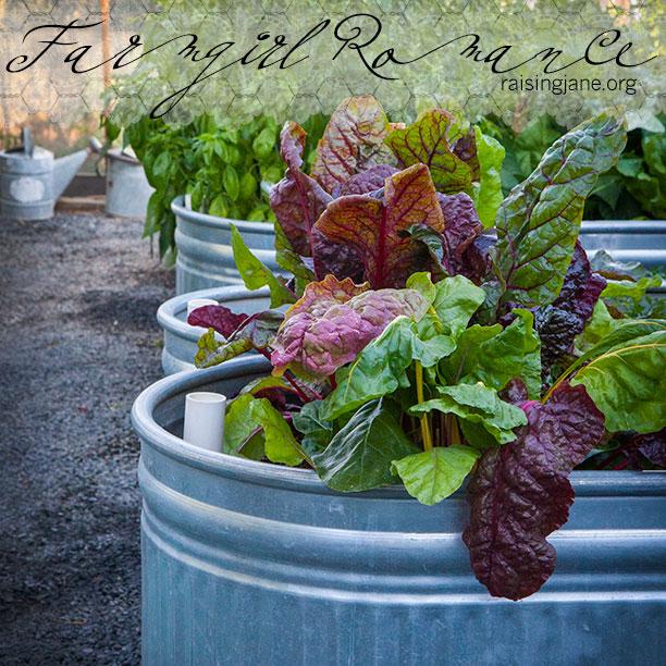 farm_romance-7121