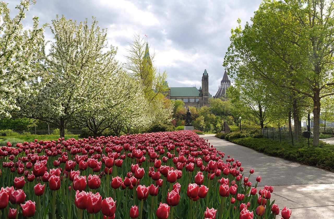 1280px-Ottawa_-_ON_-_Tulpenparade