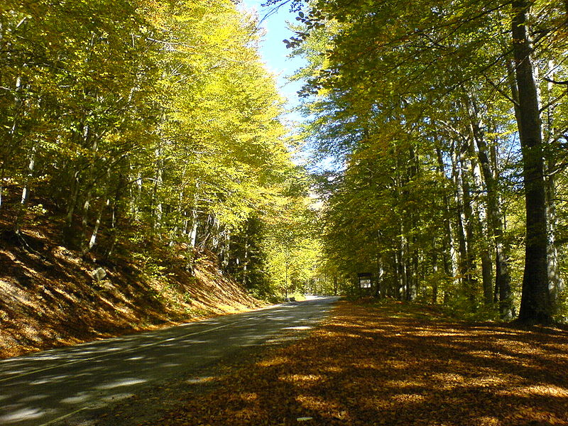 800px-Road_in_Rila_mountain-autumn_2007