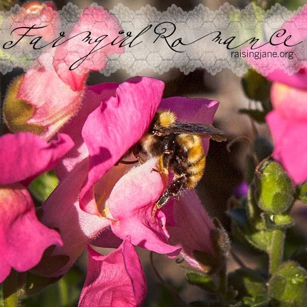 Farm_Romance-4062
