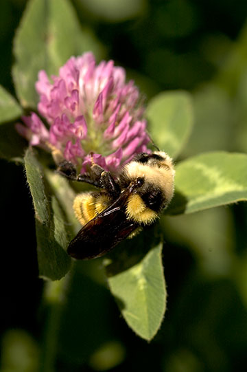 bee-fuzzy