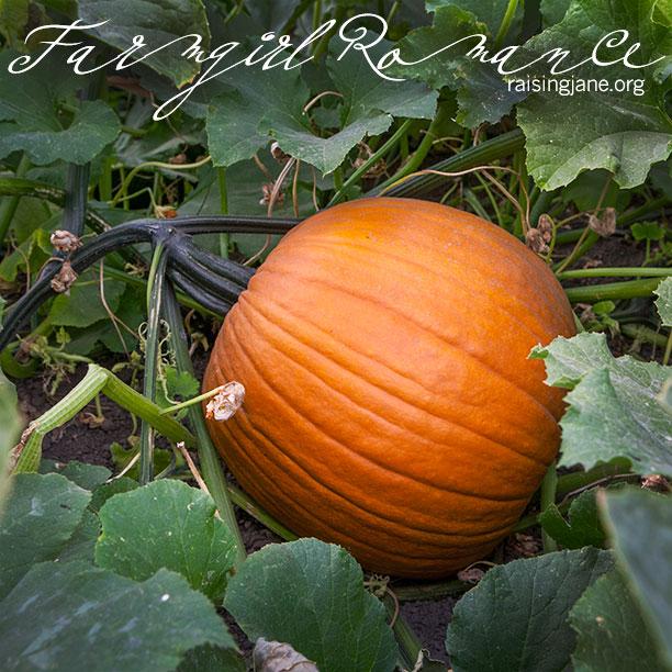 farm_romance-0568