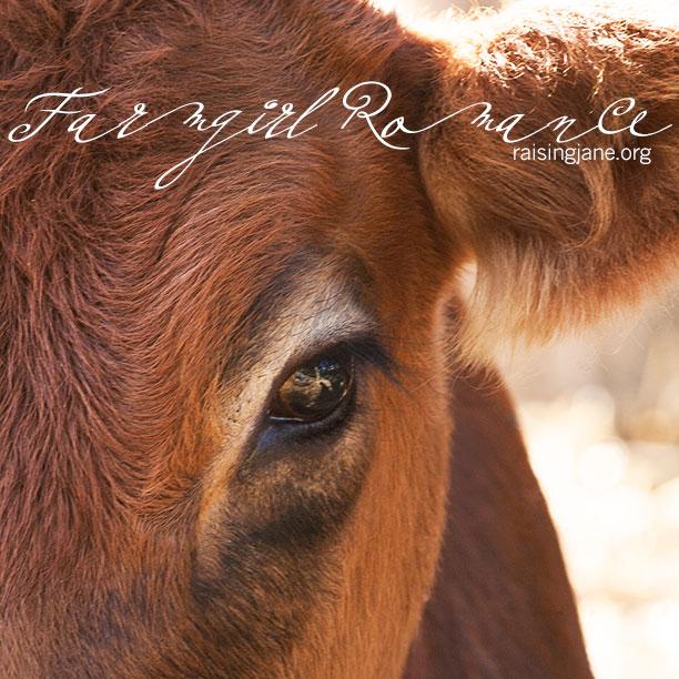 farm_romance-4338