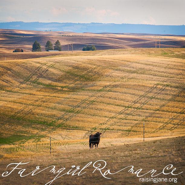 farm_romance-5418