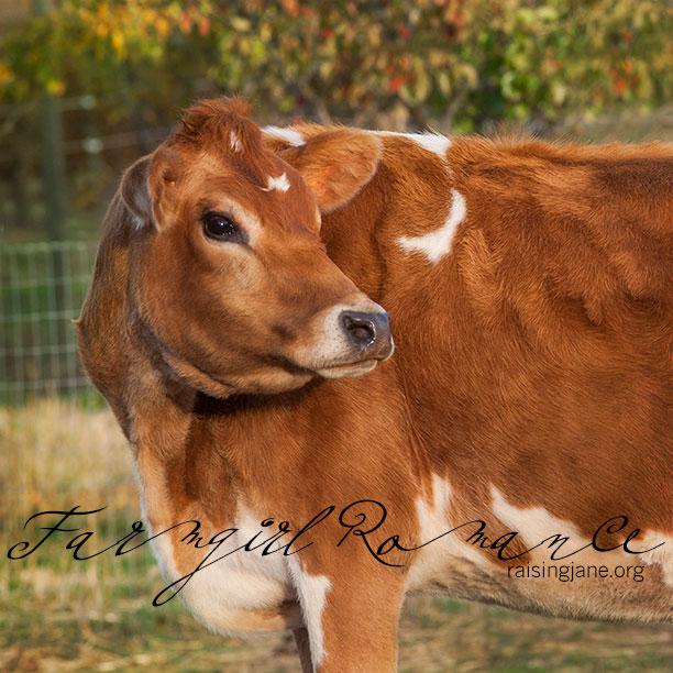 farm_romance-5420