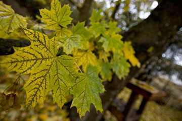 leaves-IG0H0248