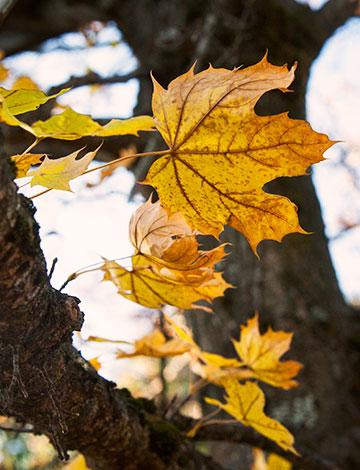 leaves_4675
