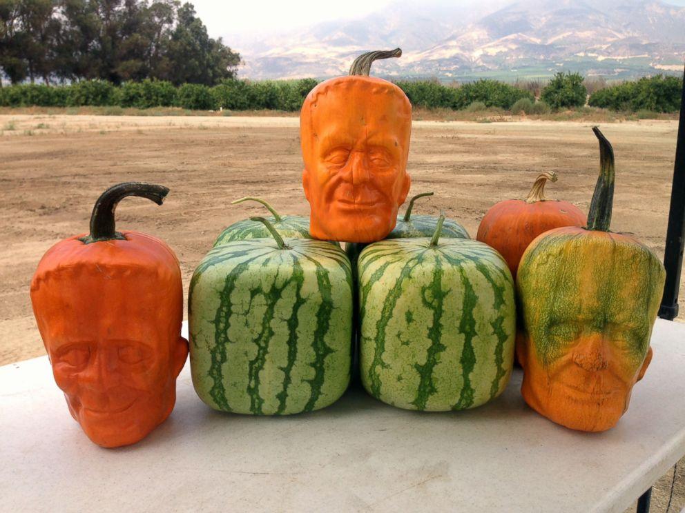 pumpkin-stein3