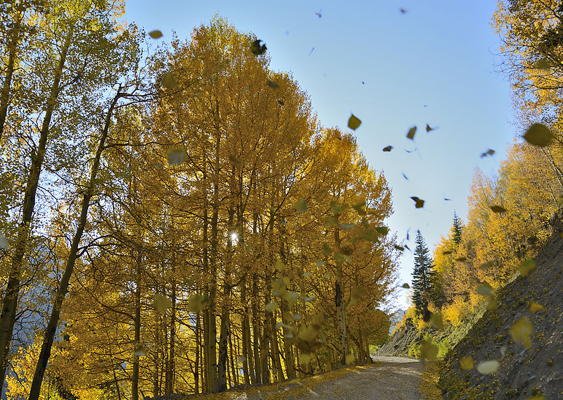 800px-Falling_Leaves_(8009304756)