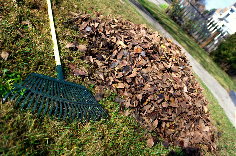 800px-Leaf_rake_and_leaves