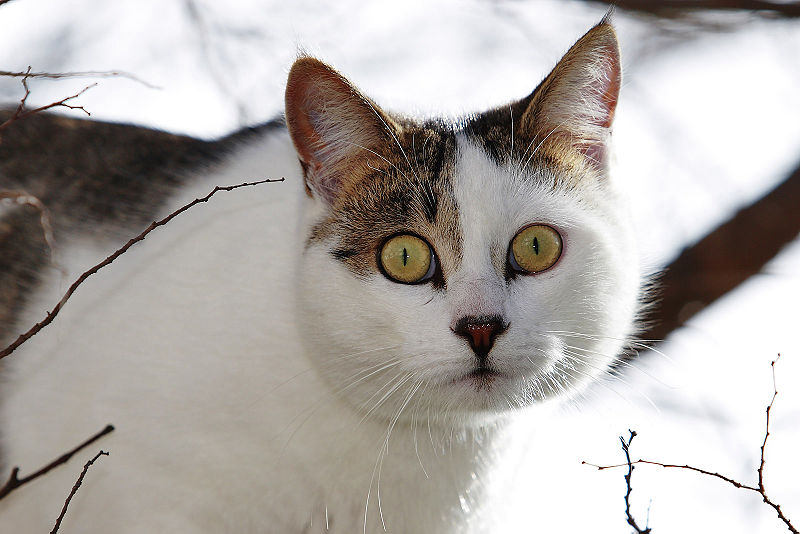 800px-Cat_in_tree