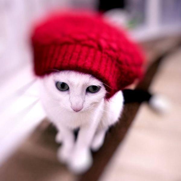 My_crazy_cat