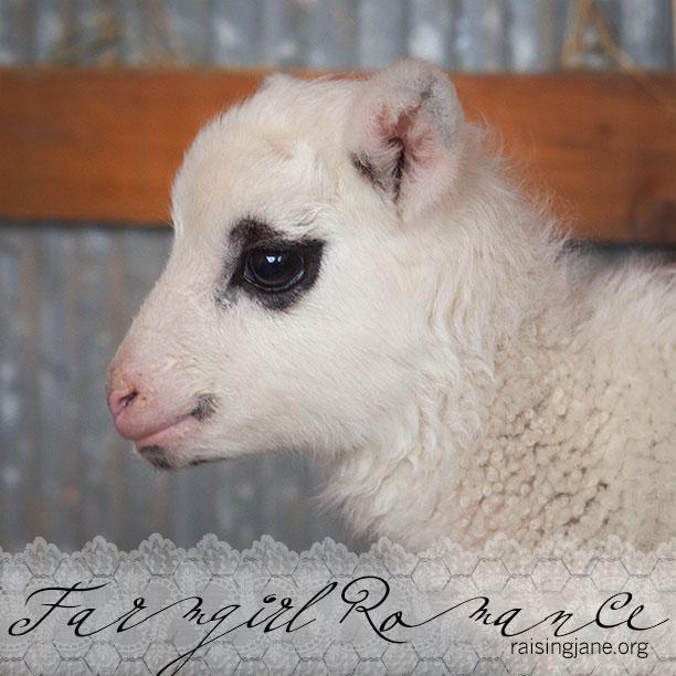 farm-romance_4018