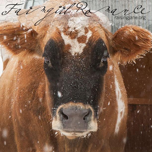 farm_romance_6652