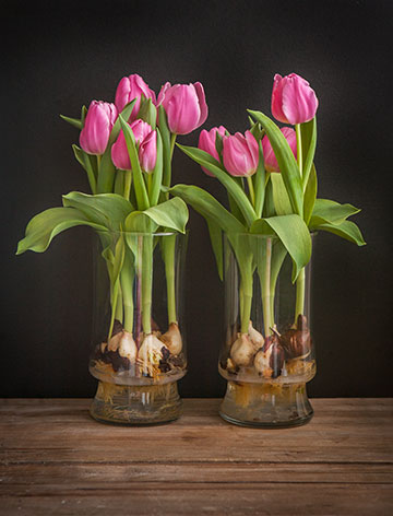 Tu Tulip Vases Raising Jane Journal