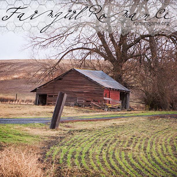 farm-romance-7589