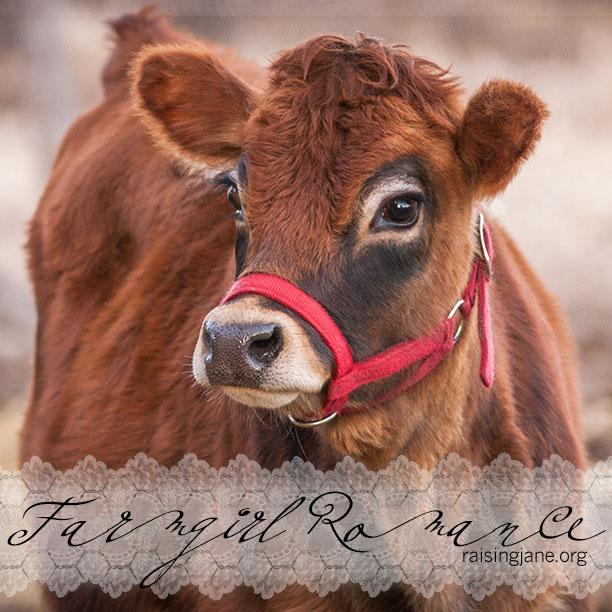 farm-romance-8720
