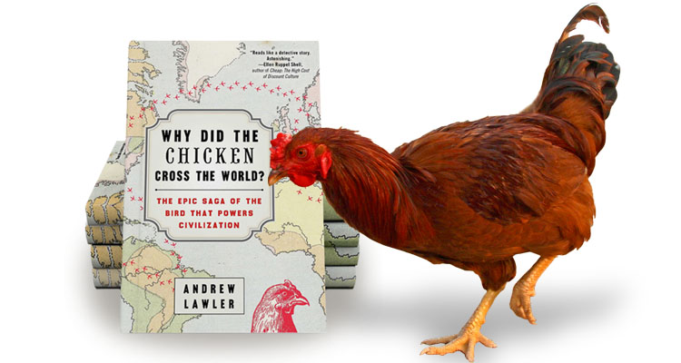 chicken-book-with-bird