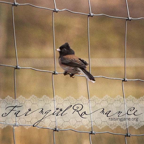 farm-romance_9787