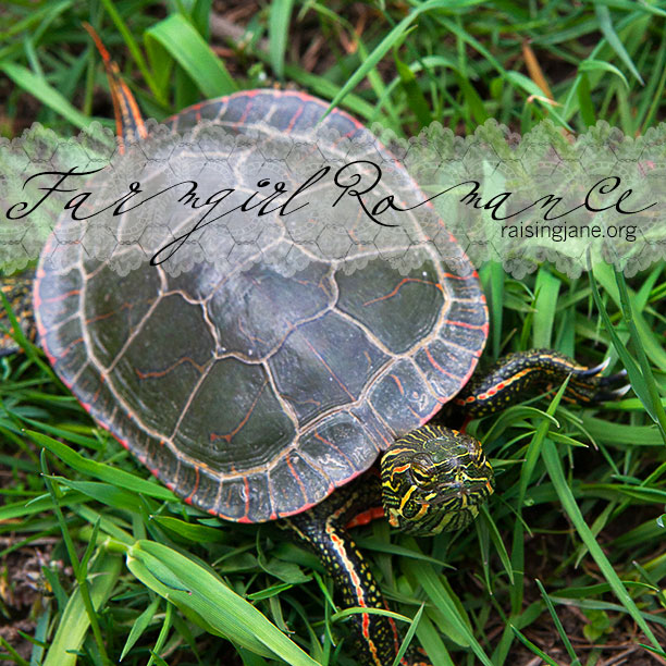 painted_turtle-1001