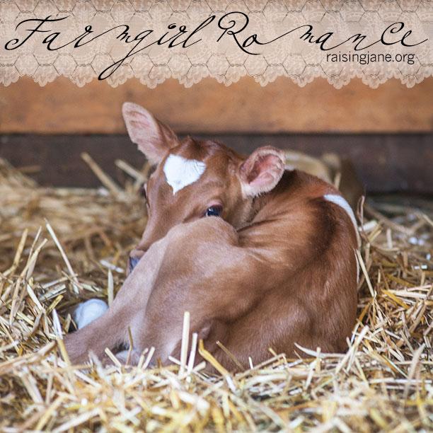 farm-romance-5815