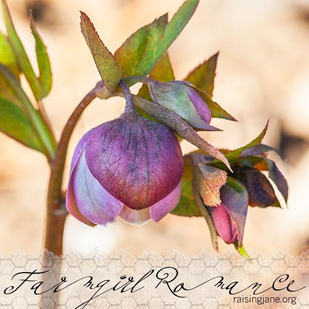 farm-romance_1052
