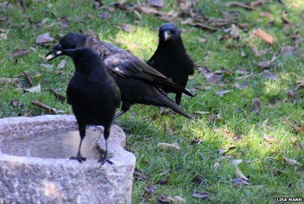 gabi-birds2